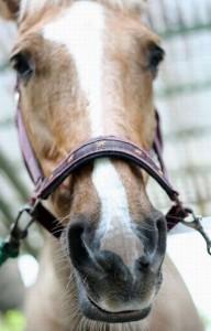 濱田崇裕horse