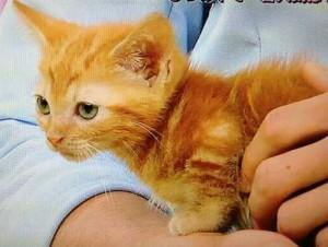 村上信五愛猫ちーちゃんwaw
